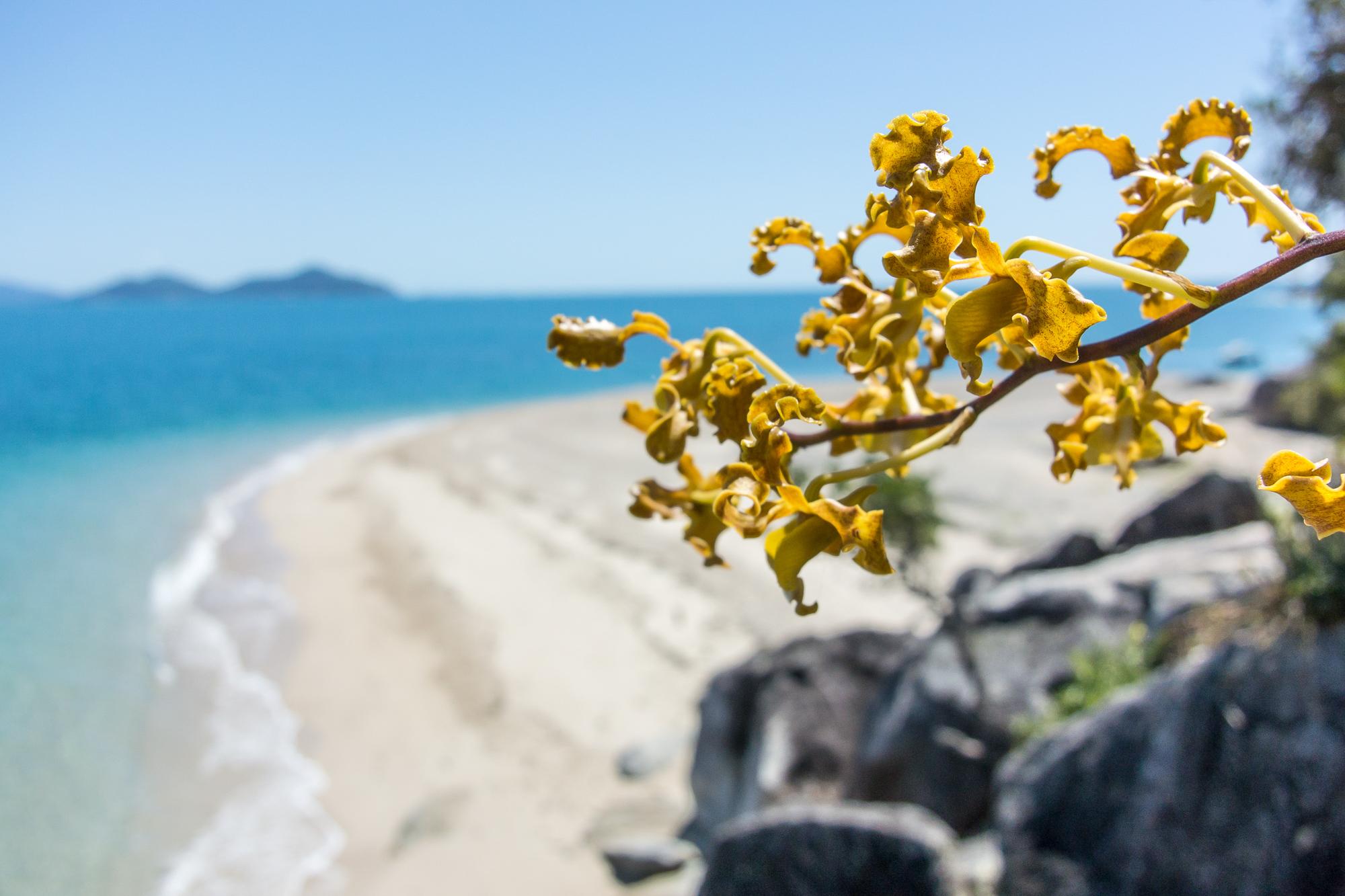 bowden-island-mission-beach-50